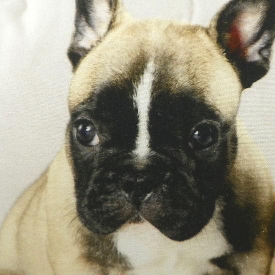 französische bulldogge welpen beige
